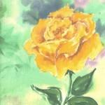 yellow rose no signature